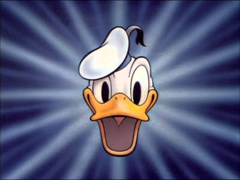 list of donald duck cartoons donald duck wiki fandom powered by