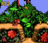 JungleHijinxsKritter