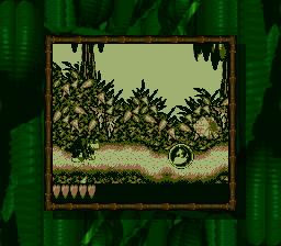 JungleJaunt