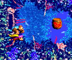 Ripcurl reef