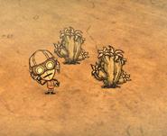 Desert Goggles Worn