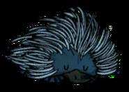 Platapine Sleeping