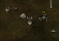 Pets Group Picture.png