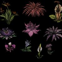 Flower Don T Starve Wiki Fandom