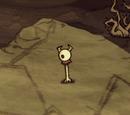 Eye Bone