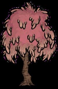 Tree/Sugarwood