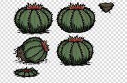 Cactus f