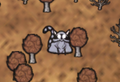 Catcoon icon deciduous forest.png