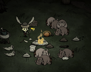 Sleeping Pigs