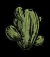Oasis Cactus