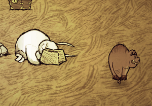 Bunnyman pig