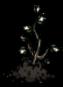 Rainforest Tree Sapling