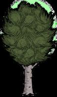 Abedul grande verde