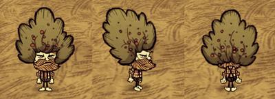 Bush Hat Woodie