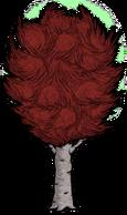 Abedul grande rojo