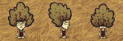 Bush Hat Wickerbottom
