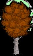 Abedul grande amarillo