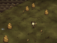 Several Beehives