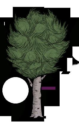 樹/白樺樹