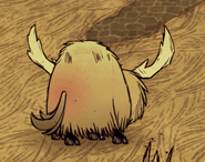 发情的牦牛