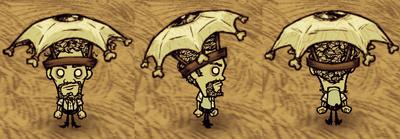 Eyebrella Warly