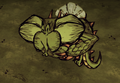 Dragonfly Eating.png