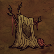 Catcoon-nest