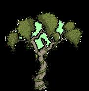 Unused Rainforest Tree 1