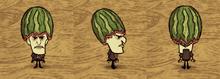 Fashion Melon Maxwell