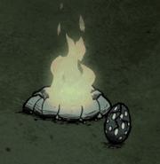 Hatching Tallbird Egg next to fire during night