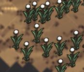 Light Flowers map