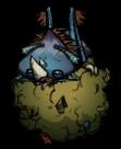Dung Beetle Sleeping 1