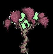Unused Rainforest Tree 2