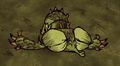 Dragonfly Sleeping.png