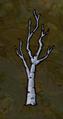 Birchnut bare.png