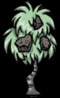 石果灌木丛