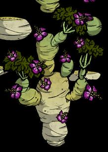 Tree/Tuber