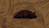 Suspicious Dirt Pile