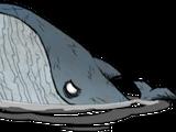 鯨魚/藍鯨