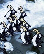 Pengull flock