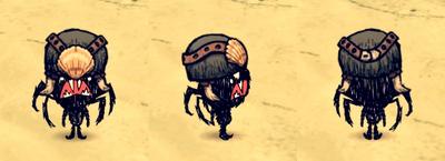 Horned Helmet Webber