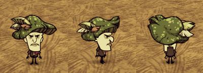 Green Funcap Maxwell
