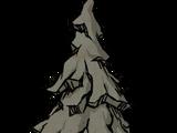 石化的常青樹