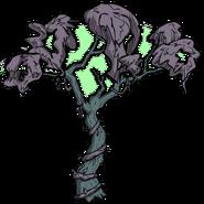 Unused Sick Rainforest Tree