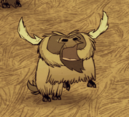 Beefalo cry while in mating season