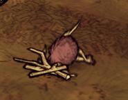 Birchnutter Dead