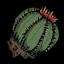 Dug Cactus