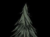 Baum/Immergrün