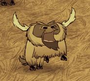 Büffel Paarungszeit2