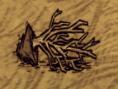 Ausgegrabener Setzling
